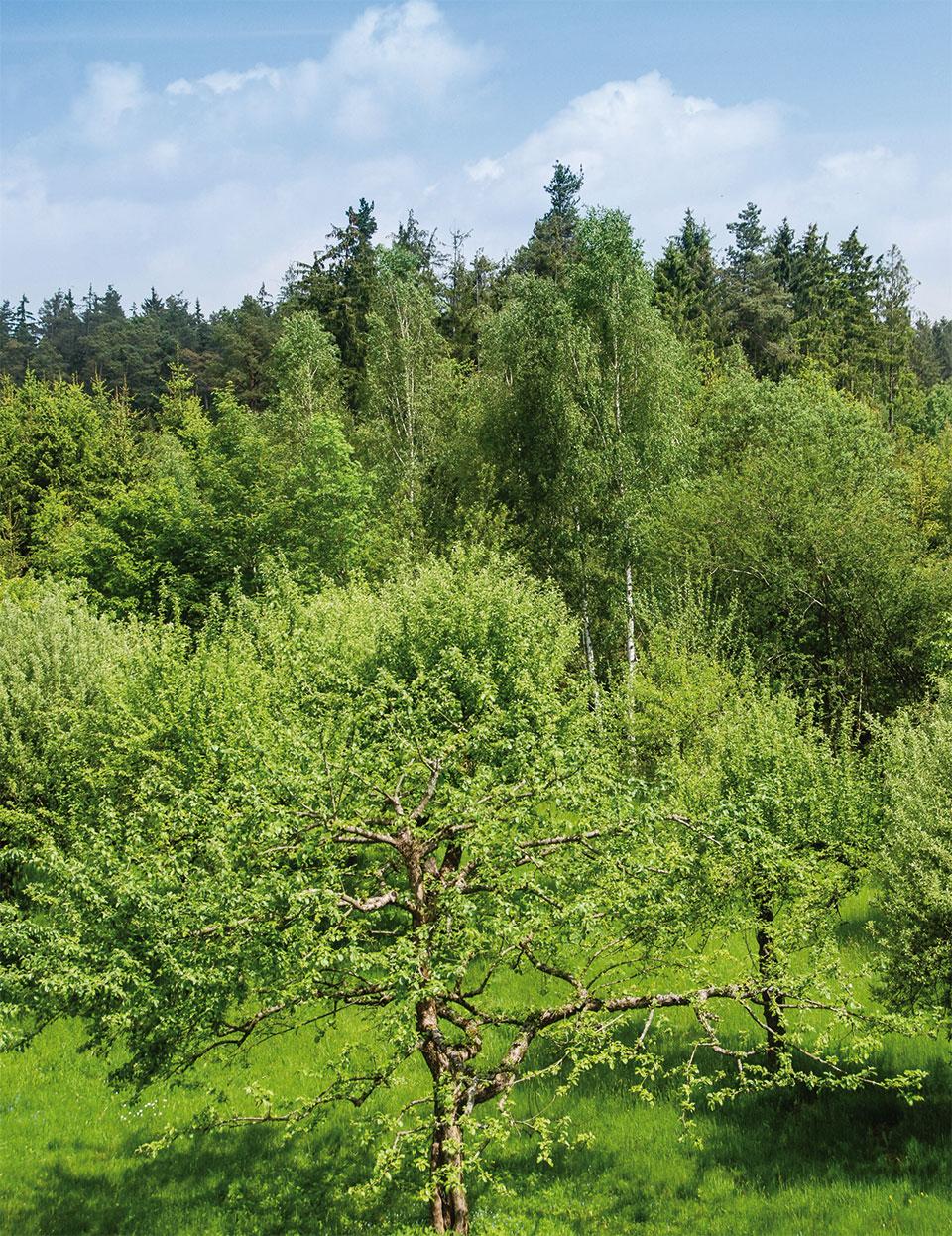 Waldhotel Rainau - Ausblick